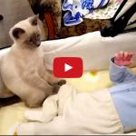 Gatto accudisce cucciolo d'uomo