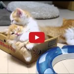 Gattino vuole dormire i fratellini dispettosi lo svegliano.