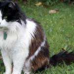 L'incredibile storia di CASPER, il Gatto pendolare