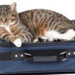 Tempo di vacanze portate con voi il micio? Ecco alcune regole che è bene non dimenticare!
