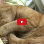 Gatto ciuccia il dito mentre dorme