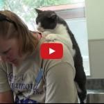 Io gratto la schiena al mio gatto e lui gratta la mia.