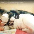 Gatti e Bambini - Una Simpatica compilation